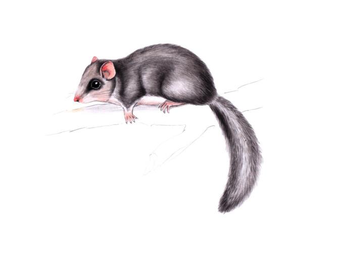 Piege A Rat Leroy Merlin Gamboahinestrosa Nasse A Rat Castorama Gamboahinestrosa