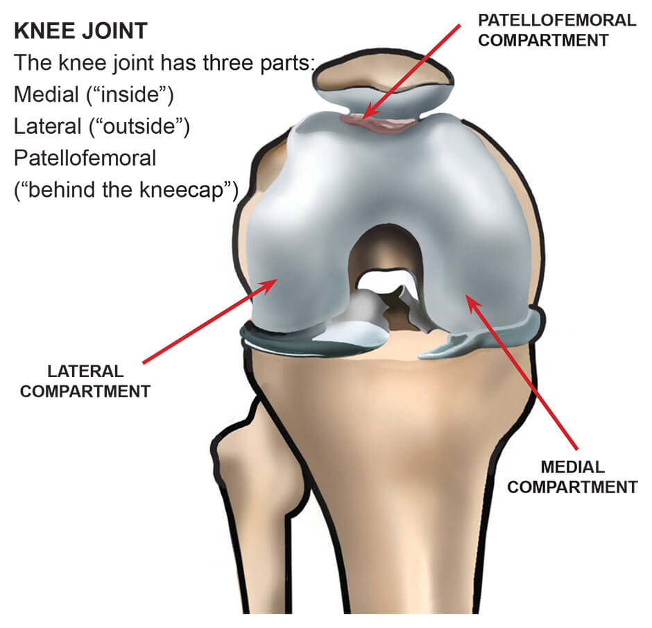 medium resolution of diagram showing the compartments of the knees joint