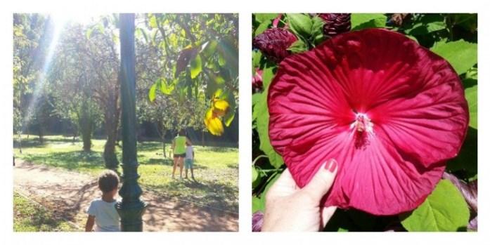 au parc fleur rouge