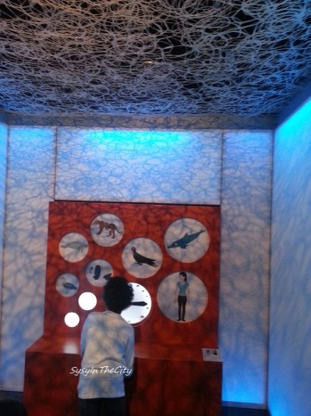 bb animaux museum sysyinthecity