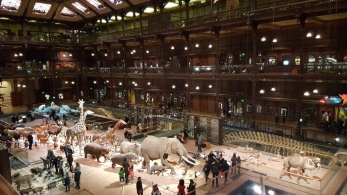Grande galerie de l'évolution Paris SysyInTheCity (11)