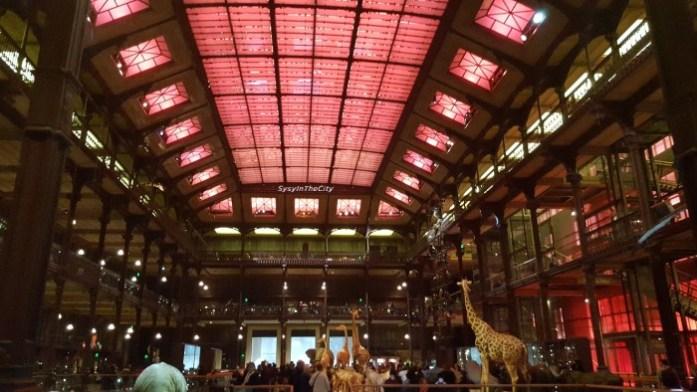 Grande galerie de l'évolution Paris SysyInTheCity (9)