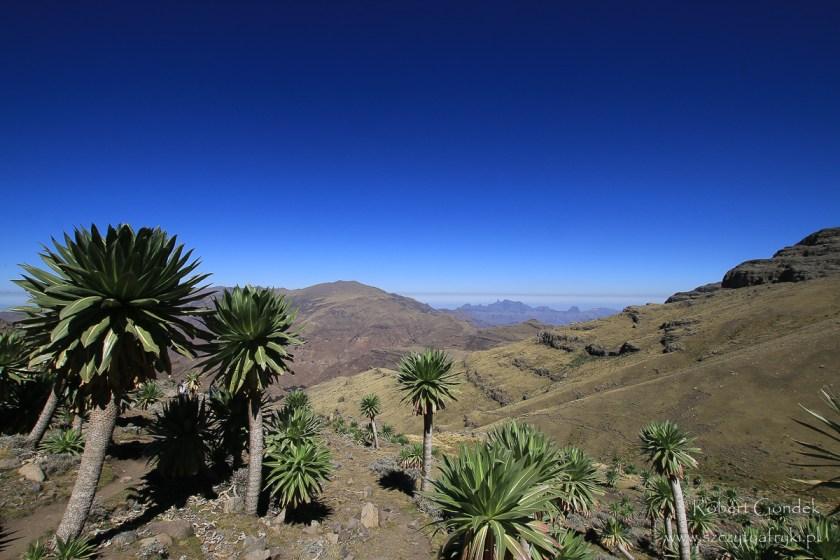 Etiopia - Góry Semien – okolice Ras Dashen