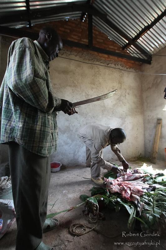 Ćwiartowanie kozła podczas wizyty u plemienia Kuria