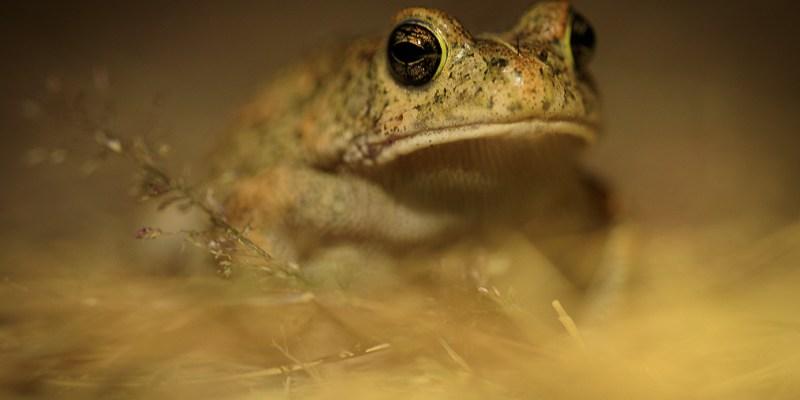 Żaba nocą