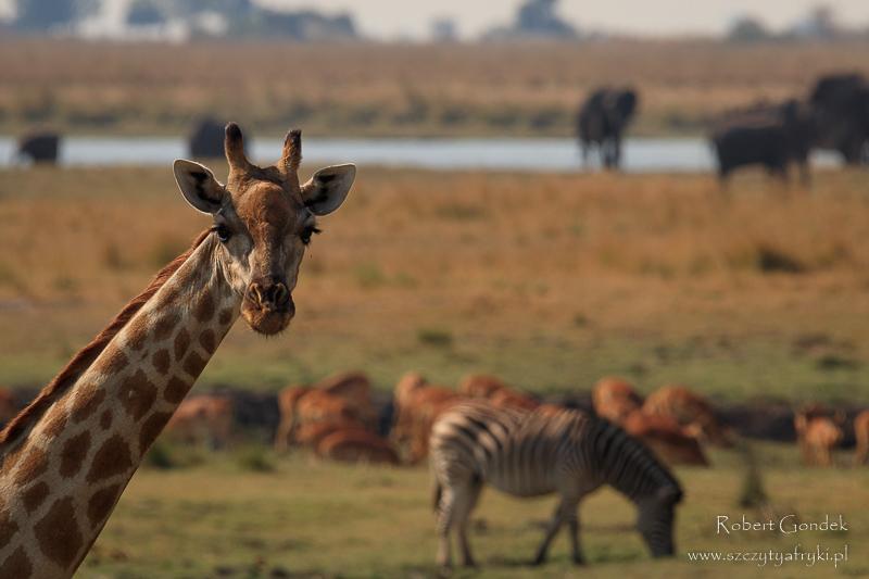 Park Narodowy Chobe