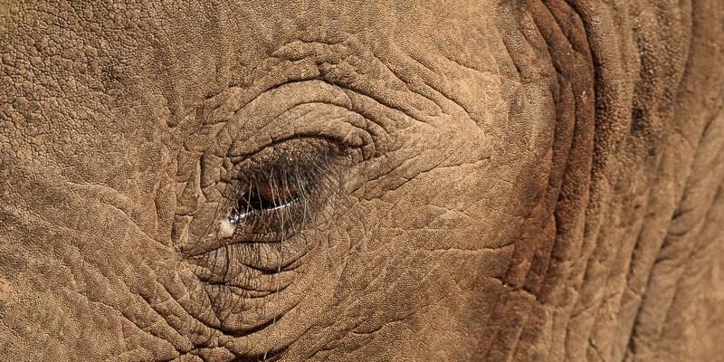 Słoń z Mana Pools