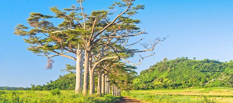 Madagaskar - baobaby