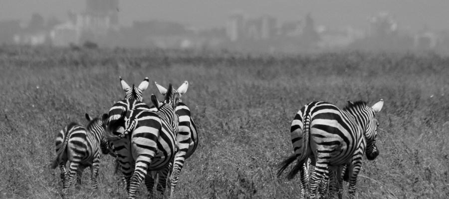 Jednodniowe safari w Parku Narodowym Nairobi
