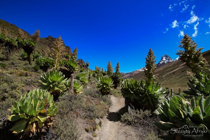 Trekking na Mount Kenya w Kenii - koszt