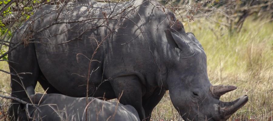 Wycieczka do Ziwa Rhino Sanctuary