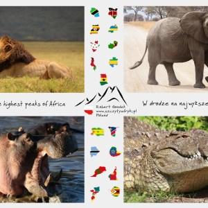 Zdjęcia afrykańskich zwierząt