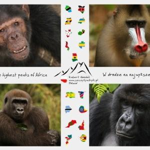 Zdjęcia afrykańskich małp