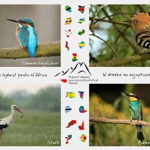 Zdjęcia kolorowych ptaków z Polski