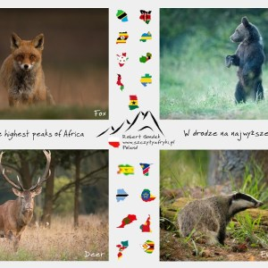 Zdjęcia polskich zwierząt