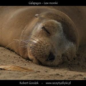 Zdjęcie śpiącego lwa morskiego z Galapagos