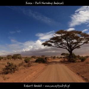 Zdjęcie z Parku Narodowego Amboseli