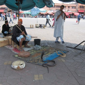Snake charmers plying their trade