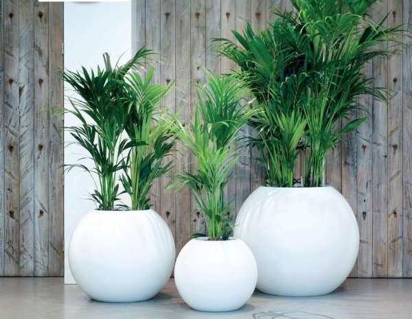 Fiberglass Planters - Hotel Planter Boxes T2
