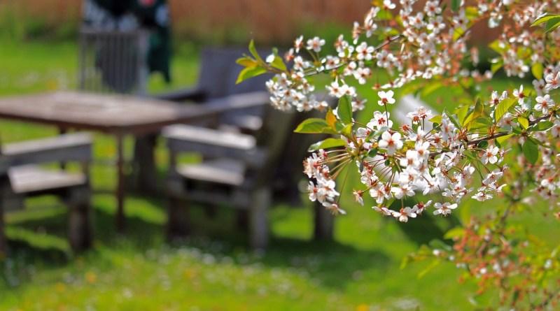 Spring Cherry Blossoms Cherry Tree  - KRiemer / Pixabay