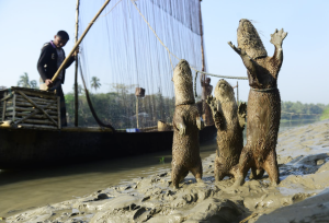 Otter Fishing and Sundarbans Special Tour