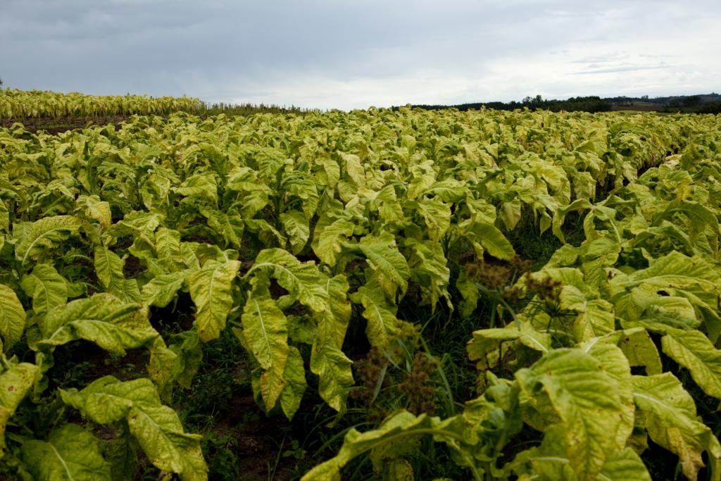 About  Tabaccheria DAvino