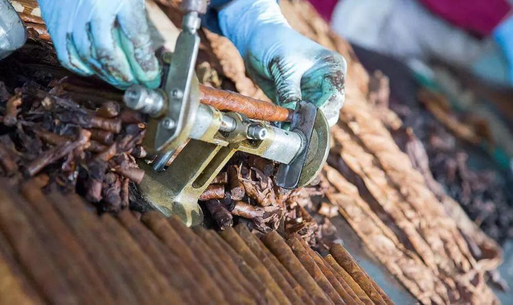 lavorazione sigari Toscani taglio cimette