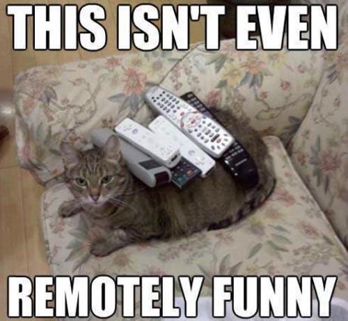 cat-remotes