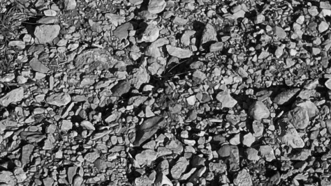800px-Rocky_vineyard_soil_terroir-la-peira