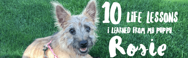 10 Life Lessons I Learned from My Puppy Rosie