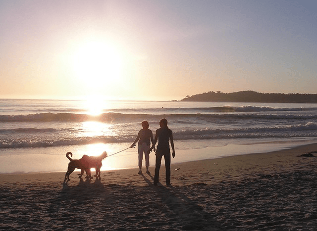Super dog friend Carmel Beach where your pooch can frolic in the waves leash free! Tabler Party of Two