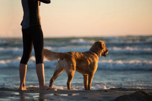 寵物溝通推薦、寵物溝通課程、寵物溝通
