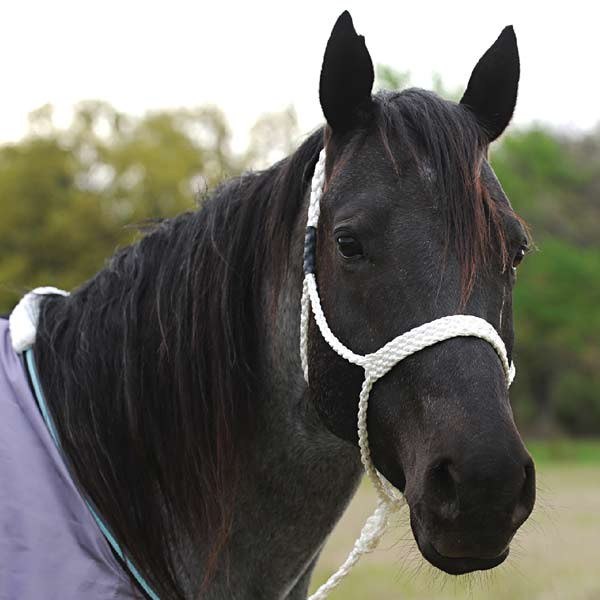 Martin Saddley Horse Halter