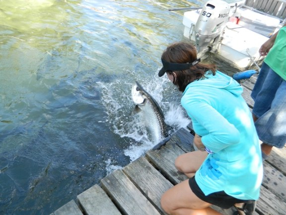 feeding the tarpon in belize