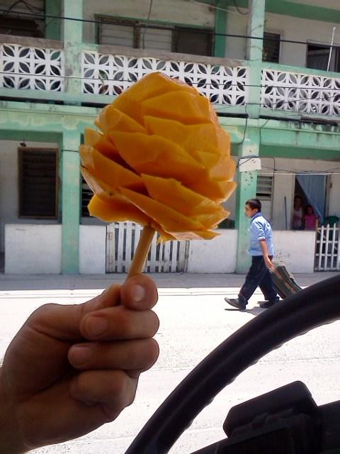 fruits of belize