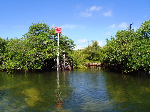 mangrove canal ambergris caye