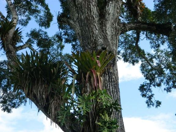 orchids in belize
