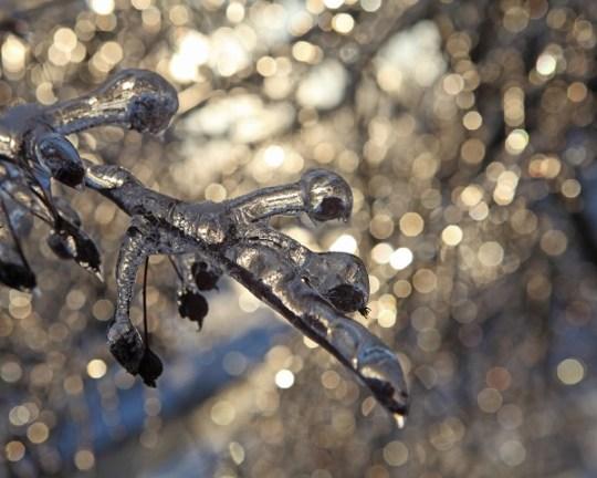 ontario ice storm 2013