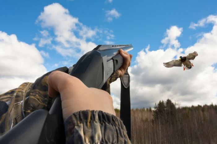 Duck Hunting Tips for Beginners