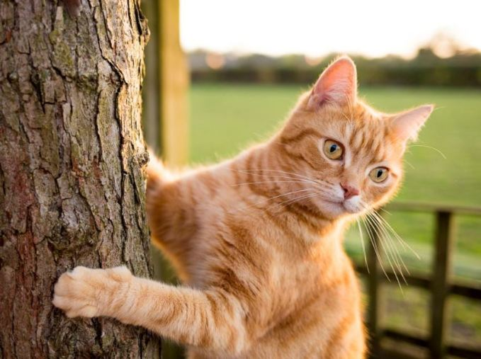 Pros And Cons Of Bringing Cats To Camping