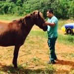 Menor que montaba caballo choca con auto