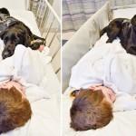 El perro fiel que se negó a abandonar a su amo, un niño autista, cuando tuvo que ir al hospital