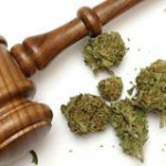 Desde hoy en Toa Baja se dispensa flor de cannabis medicinal