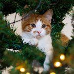 ¿Tienes un gato?: Evita que destruya el árbol de Navidad