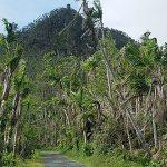 Renovación natural de El Yunque: El bosque nacional y su autosanación