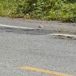 Una persona muerta y cinco heridos en accidente en Ciales