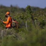 El DRNA no tiene pistas del cazador desaparecido en Isla de Mona