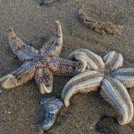 Una ola de frío convierte una playa británica en un cementerio marino