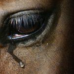 Se registra accidentes de auto con caballos en Humacao
