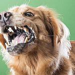 Policía repele ataque de perro con su arma